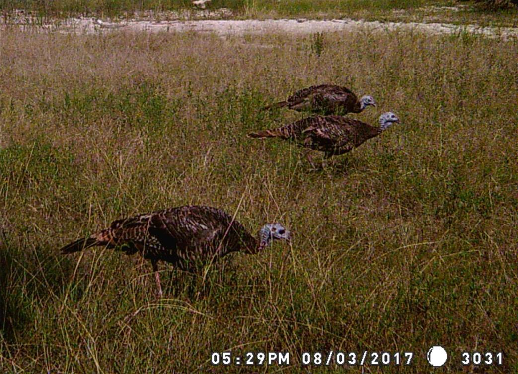 Closed | 429 Saddle Ridge Drive Burnet, TX 78605 8