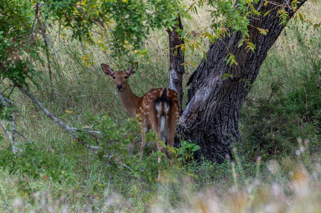 Closed | 12120 Cow Creek Road Marble Falls, TX 78654 60