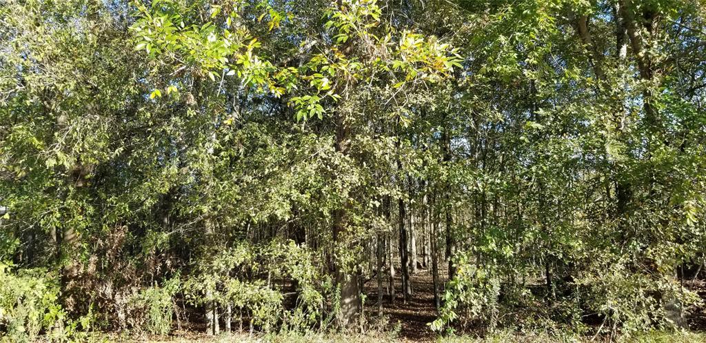 Active | 1206 Grand Estates Drive Richmond, Texas 77469 4