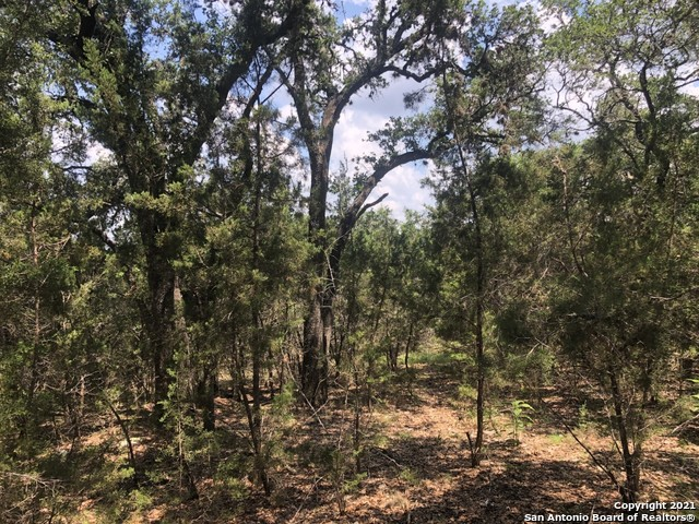Active Option | 446 W Overlook Dr Canyon Lake, TX 78133 3