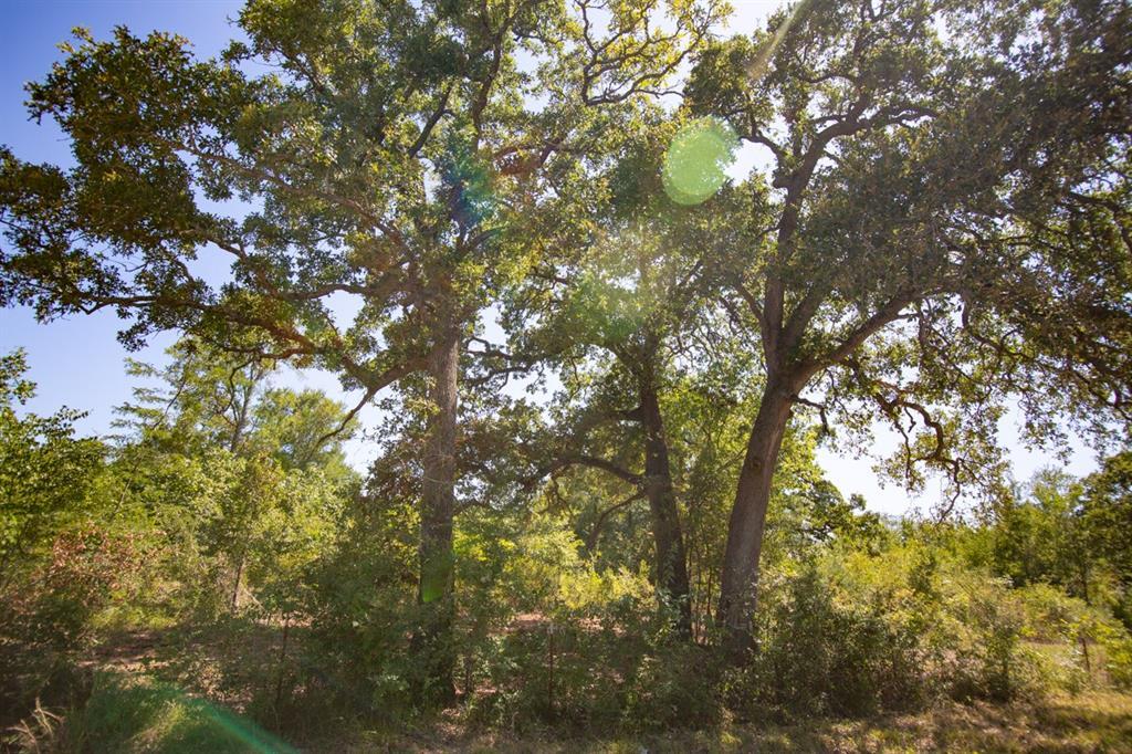 Active | 000 Morgan Spur Huntsville, Texas 77342 0